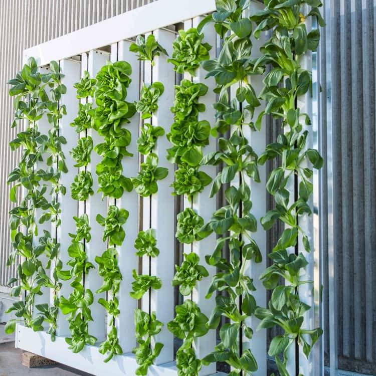 Indoor gardening without soil-growing plants without soil-plants that grow in water without soil-can plants grow without soil-plants without soil