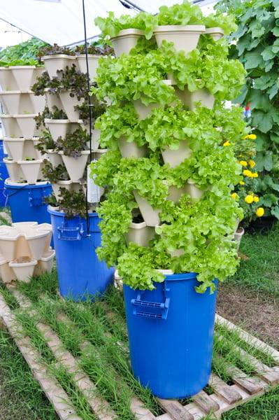 Indoor gardening without soil-growing plants without soil-plants that grow in water without soil-can plants grow without soil-plants without soil-vertical gardening-hydroponics
