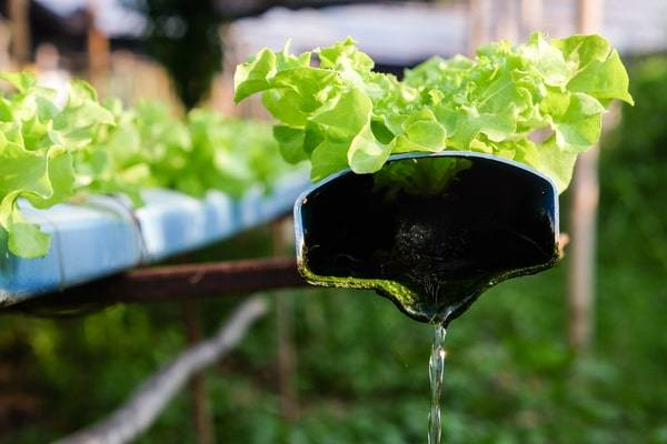 maintain a hydroponic system-hydroponic reservoir maintenance-nutrient reserve