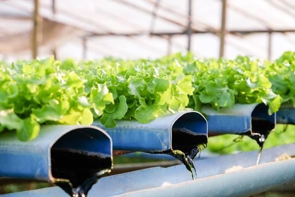 maintain a hydroponic system-hydroponic reservoir maintenance-nutrient reserve-nutrient film technique-nft