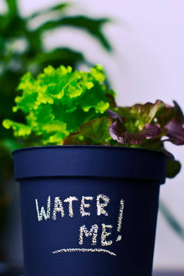maintain a hydroponic system-hydroponic reservoir maintenance-nutrient reserve-hydroponic-water-how often to water hydroponic