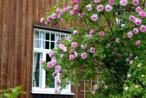 gardens orientation-plants for north side of house-north facing landscape ideas-southeast flowers-north facing landscape ideas