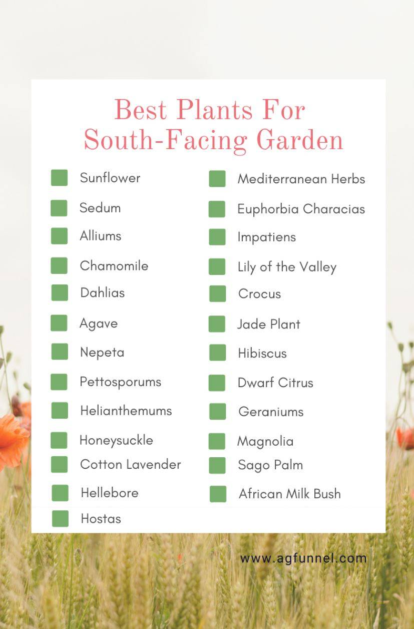 gardens orientation-south facing garden-best plants to grow in south facing garden-plants for south side of house-south east-flowers-