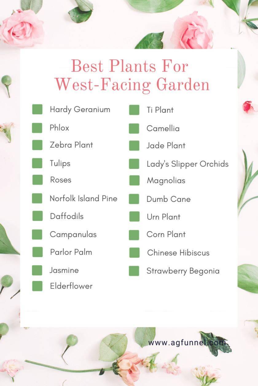 gardens orientation-Plants for west facing garden-west-garden-landscape-design