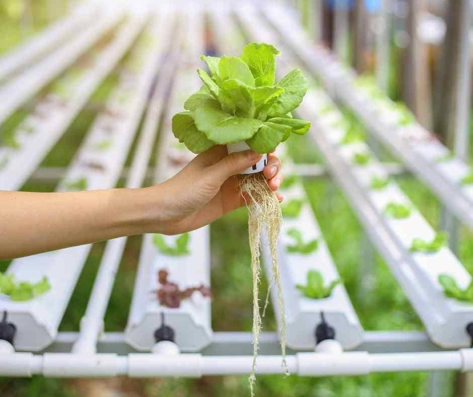 nutrient film technique-nft-how to build nutrient film technique-hydroponics
