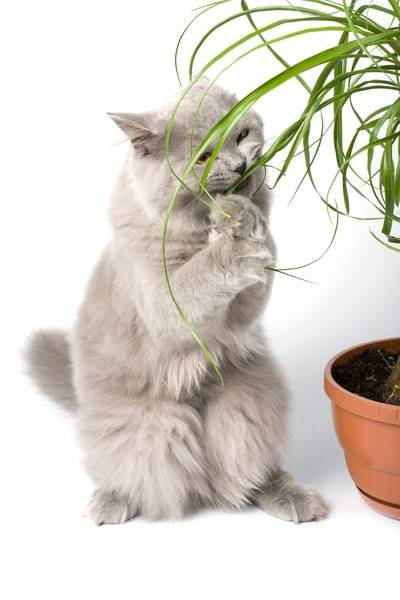 how to keep cats away-how to stop cats from eating plants-how to keep cats away from plants-plants to deter cats