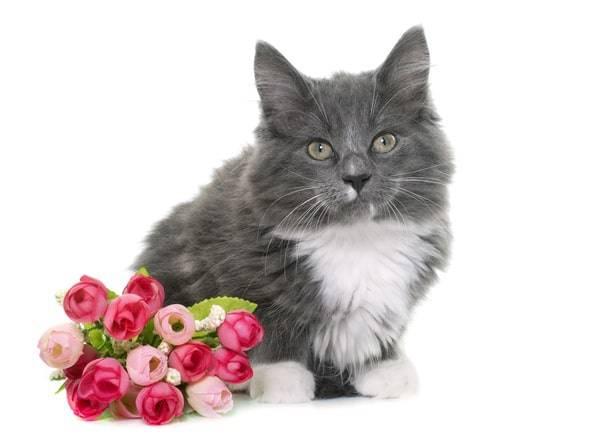 how to keep cats away-how to keep cats away from plants-how to keep cats out of plants-what keeps cats away