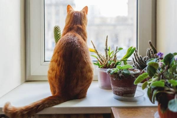 how to keep cats away-how to keep cats away from plants-how to keep cats out of plants