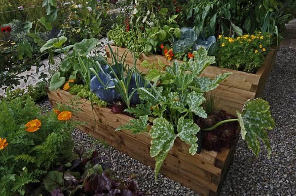 163184766067831850944 vegetable and flower garden raised%20garden%20bed raised%20garden%20bed%20plan optimize