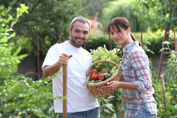 tomato fertilizer-best fertilizer for tomatoes-best fertilizer-tomato tone-tomato plant fertilizer-organic tomato fertilizer-planting-tomato