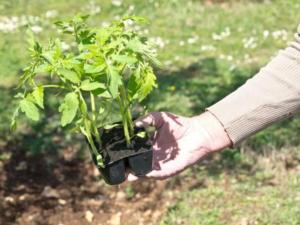 tomato fertilizer-best fertilizer for tomatoes-best fertilizer-tomato tone-tomato plant fertilizer-organic tomato fertilizer-